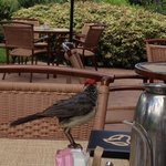 cute bird - came for tea