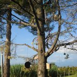Photo of B&B L' Albero Di Antonia