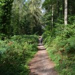 Foto de Forest Holidays Forest of Dean, Gloucestershire
