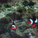 Foto de Bubbles Dive Centre and Resort