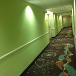 Lime Green Walls & Dark Brown/Turquoise Carpeting