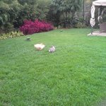 Our resident rabbits