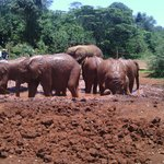 Cute little babies at the Sheldrick wildlife trust