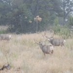 spotted bucks on our 2nd day