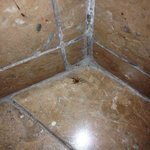 Spider and dirt in bathroom corner.