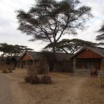 Foto de Ndutu Safari Lodge