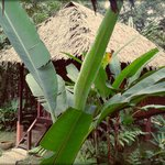 Our Jungle House Foto