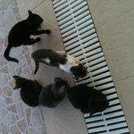 The beautiful little family of kittens at Manousis