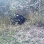 We were lucky to see a bear