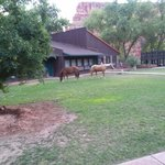 courtyard at the lodge