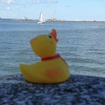 Our duck enjoying the view at Lake Erie