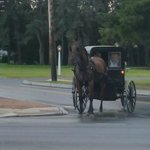 Amish around the area