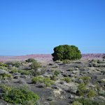 Photo de Painted Desert