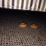 Food found under the bed!