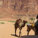 Bedouin Lifestyle Camp照片