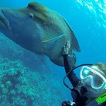 Down Under Cruise & Dive Foto