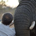 Friendly Elephant