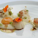 Scallops with Cauliflower Puree & Apricot