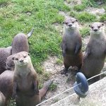 Tamar Otter and Wildlife Centre Foto