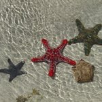 Sea stars at the sand bank in front of the hotel