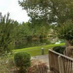 Part of our deck, trees and water