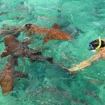 Snorkeling with the sharks!