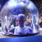 Pop-up Dome Aquarium