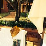 Foto de Park Hyatt Goa Resort and Spa