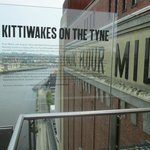 Kittiwake nests on the Baltic building