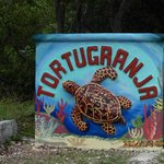 Photo de Tortugranja (Turtle Farm)