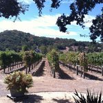 A real winery ...... where wine, not the gift shop, comes first.