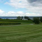 View from the winery back toward the tasting room with some of the vineyards and Seneca Lake in