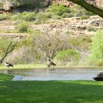 Foto di Bushmans Kloof Wilderness Reserve & Wellness Retreat