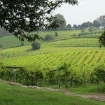 View over the vines