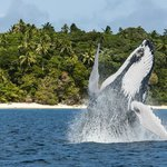 Endangered Whale Encounters - Day Tours