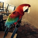 Gizmo the parrot