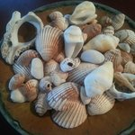 Shells from the beach. Thank you, Christian!