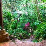 A short stairway from the driveway to the hostel through thick jungle vegetation