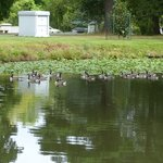One of the ponds in the cemetery