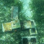 Cinder blocks in the water filled with fish