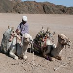 Get the chance to ride a Camel, all included in the Jeep Safari.