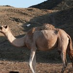 Visit a Bedouin camp, all included in the Jeep Safari.