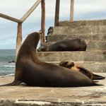 Sea Lion & Bartolome Island