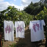 Been there!  Loved it!  Got the grape-stompin' tee-shirt!