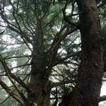 Cape Disappointment State Park Foto