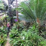 one if the littke orchid garden area