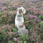 MacDuff, who will take good care of you on a hillwalking adventure.