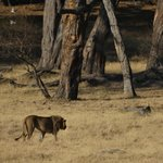 Hwange Safari Lodge照片