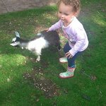 My niece petting the baby goat