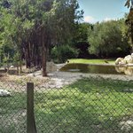 Photo of Parco Zoo Falconara